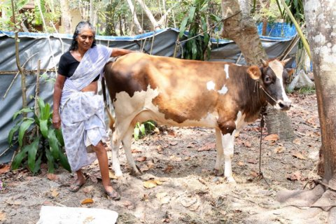 LF patient with the cow that she bought with the seed money provided by the Vocational Rehabilitation Program